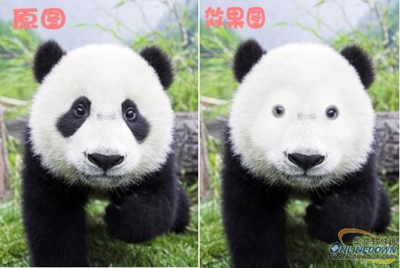 动物剪影对比图